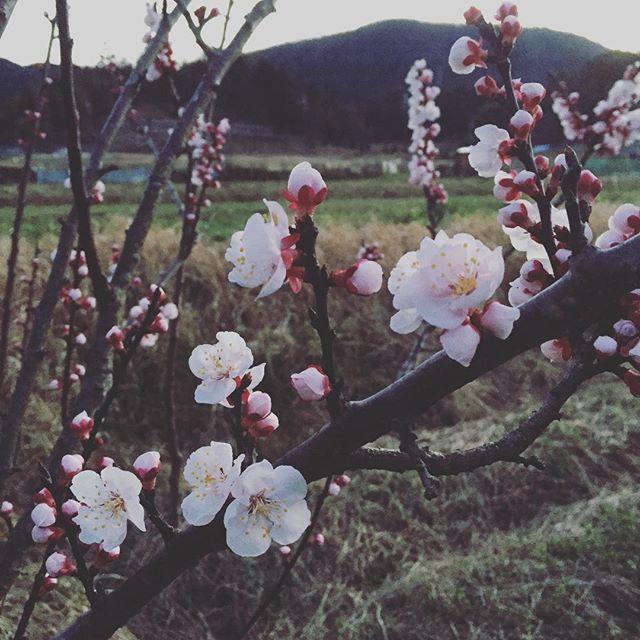 なんの花でしょうか?4月のスケジュールアップしました。答えはスタジオで )^o^(