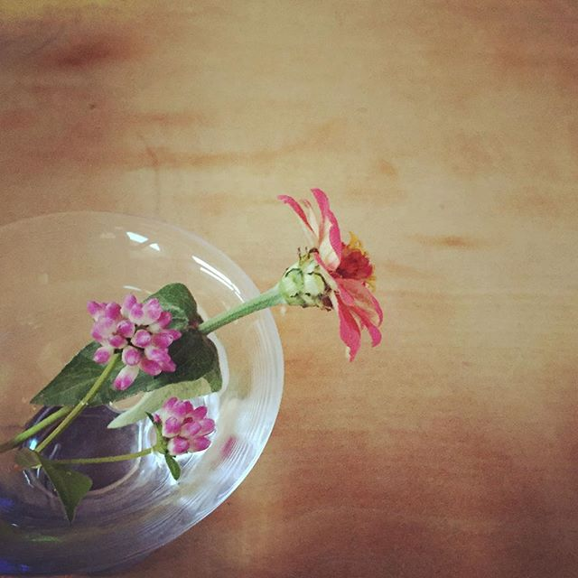 学校の帰りに。#花の中に花のある花#プレゼント