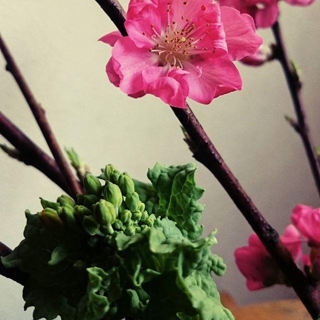 お花をあげましょ♪#桃の花#菜の花#滋賀#ヨガ#ヒノリヨガスタジオ
