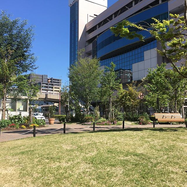 ニワヨガ、ここの芝生でみんなで楽しみましょう#ヒノリヨガスタジオ #草津#ヨガ #外ヨガ #花粉 #芝生 #ニワタス