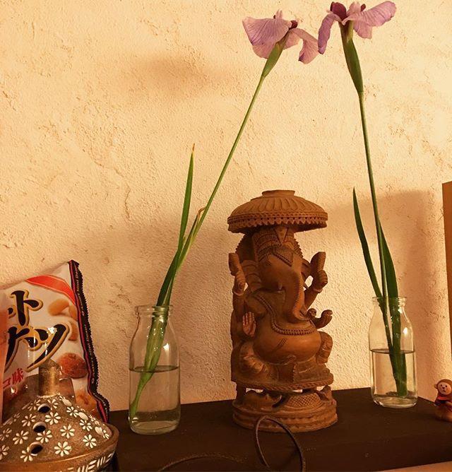 今日のお花はハーレムチック19:30〜ヴィンヤサ始まりまーす。#ヨガ #ヒノリヨガスタジオ #草津 #yoga #ガネーシャ #ganesa