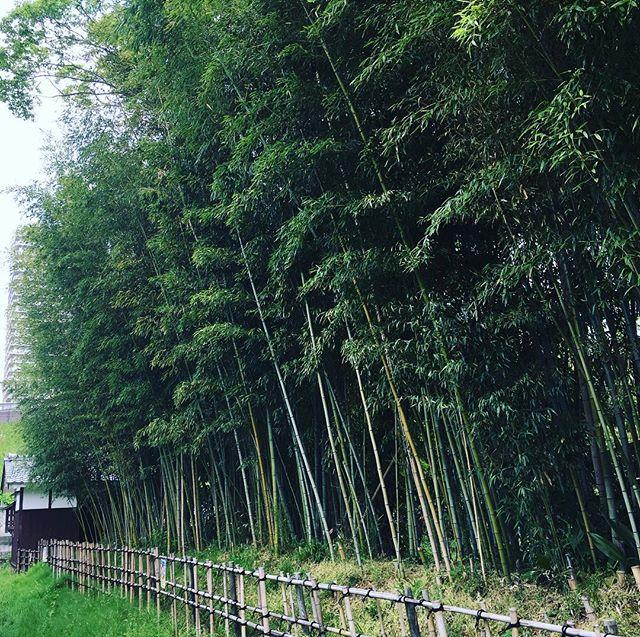 5/19 19:30〜陰ヨガ 残席1です(o^^o)お待ちしております︎#草津 #ヒノリヨガスタジオ #ヨガ #yoga #陰ヨガ #竹林